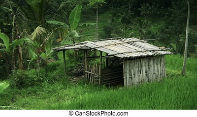 Tropical rural scenery