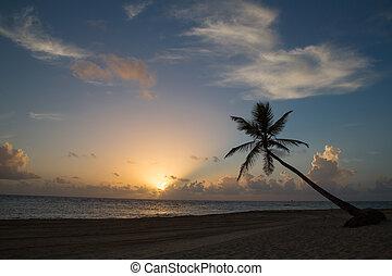 tropical, salida del sol, playa
