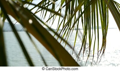 Tropical sandy beach of paradise island. Green palm leaf overlooking sea. Soft focus blurred natural abstract background with copy space and bokeh. Travel, tourism and summer vacation concept.