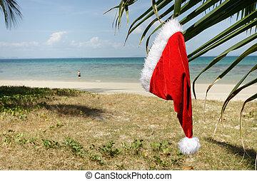 tropical santa claus hat - santas claus hat hanging on palm...
