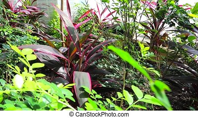 tropical scene - tropical climate