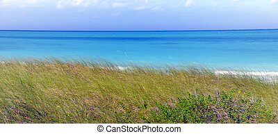 Tropical sea and green grass - Panoramic view of tropical...