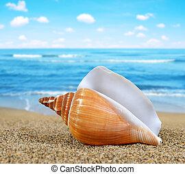 Tropical sea shell on sandy beach.