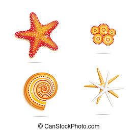 tropical sea stars symbols set on the white