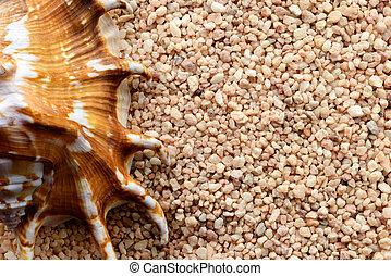 Tropical seashell on sand