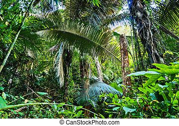 tropical, selvas