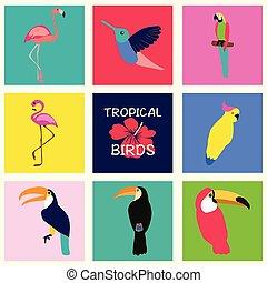 Tropical Set of birds.