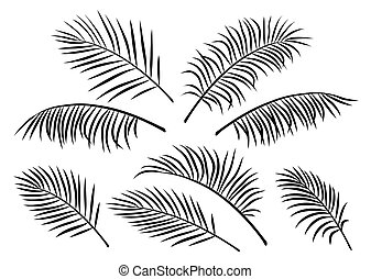 tropical set of palm leaves