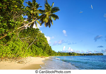 tropical, seychelles, playa