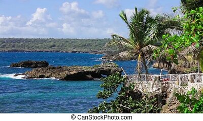 Tropical shore with palm trees