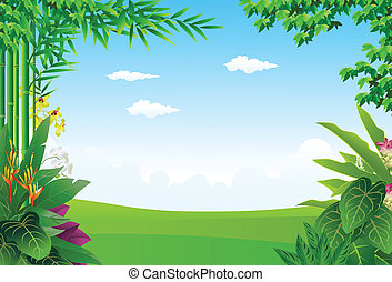 tropical skov, baggrund