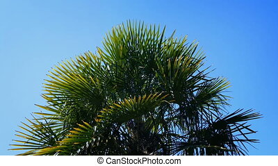 Large exotic plant with spiky leaves on sunny day