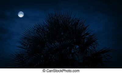 Spiky tree with full moon above in the dark