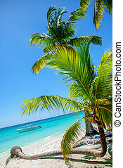 tropical strand, hos, håndflade