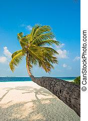 tropical strand, hos, håndflade træ