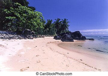 tropical strand, hos, håndflader