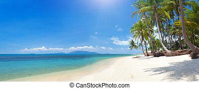tropical strand, med, kokosnöt palm