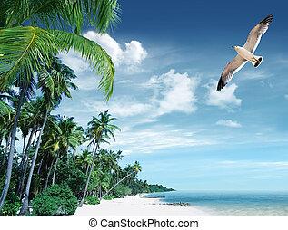 tropical strand, og, håndflade træ
