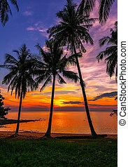tropical strand, solnedgång