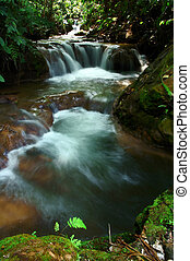 tropical stream