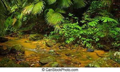 Tropical Stream through a Jungle Wilderness with Sound