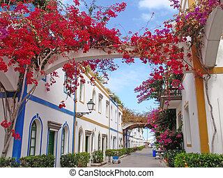 tropical street