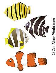 tropical, stripy, peces