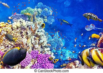 tropical, submarino, corales, mundo, fish.