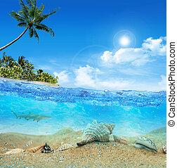tropical, submarino, playa, isla