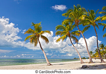 Miami Beach Florida - Tropical summer paradise in Miami...