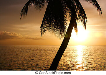 tropical sundown photgraphed in Holetown, Barbados