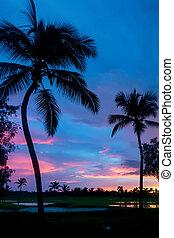 Tropical sunrise background