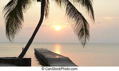 Tropical Sunrise Palm Tree - Tropical sunrise over the ocean...