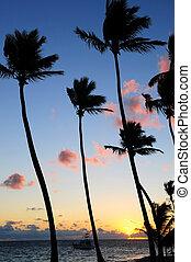 Tropical sunrise - Palm trees silhouettes at sunrise at...