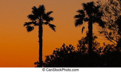 Tropical sunset background with palm trees