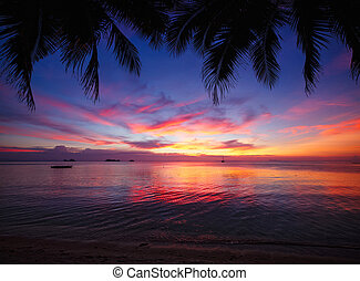 Tropical sunset beach with palm tree. Thailand, Samui island
