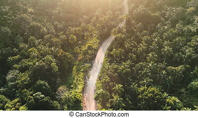 Tropical sunset jungle road, top down view. Aerial forest with palm trees in warm soft light. Nature background. Travel, outdoor tourism vacation. Beautiful wild landscape. Drone flight raising camera