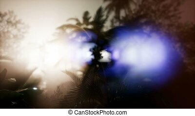 Tropical sunset. Palm tree at sunset sky. Silhouette of palm leaves