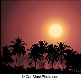 Tropical sunset, palm tree silhouet