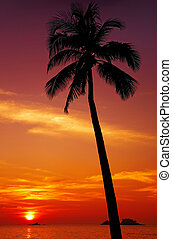 Tropical sunset - Palm tree silhouette at sunset, Chang...