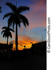 Tropical sunset palms, cuba - Two royal palm silhouettes ...
