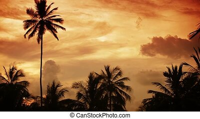 Tropical sunset sky with palm trees