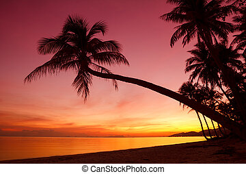 Tropical sunset with palm trees silhoette at beach