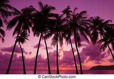 Tropical sunset with palm trees silhouette, Thailand