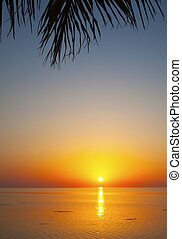 tropical sunset with palms and the ocean