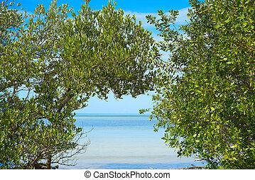 tropical sziget, holbox, mangroove, mexikó