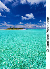 tropical sziget, kókuszdió, palm-trees