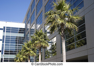 A new metal and glass biotech building in San Francisco's new Mission Bay development. Palm trees add a tropical look to the scene.