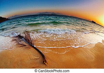 tropical tengerpart, -ban, napkelte, thaiföld