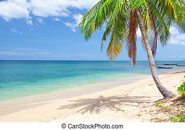tropical tengerpart, noha, kókuszdió, palm., koh lanta,...